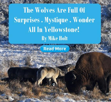 The Wolves are Full of Surprises by Mike Holt | March 2020 HSM