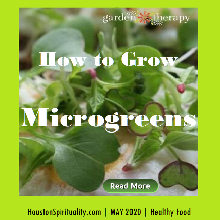 How to Grow Microgreens by Garden Therapy