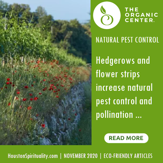 Natural Pest Control, The Organic Center. Nov 2020