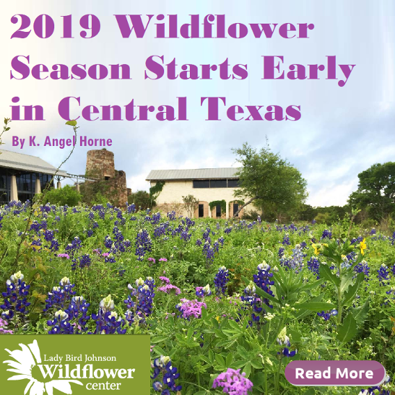 2019 Wildflower Season Starts Early in Central Texas