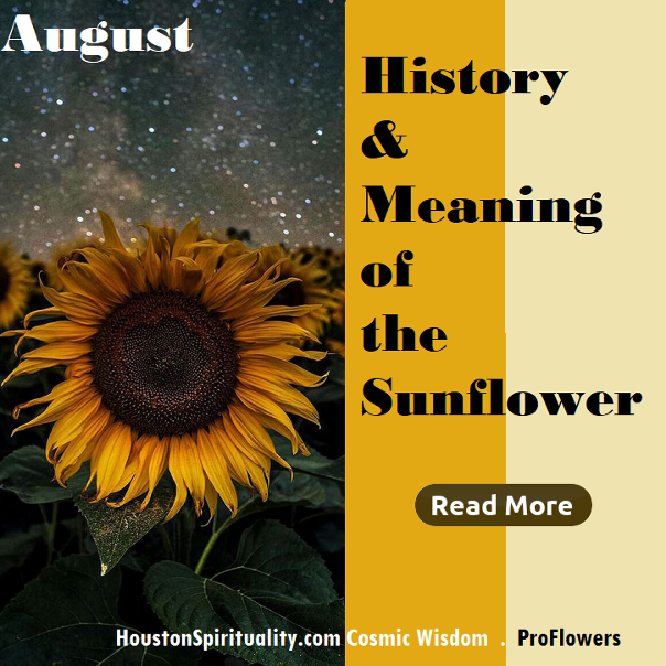 History and Meaning of the Sunflower by ProFlowers