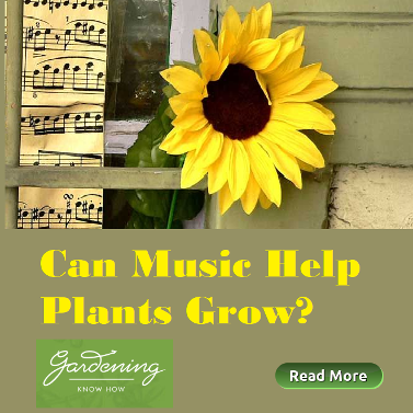 Can Music Help Plants Grow? Gardening