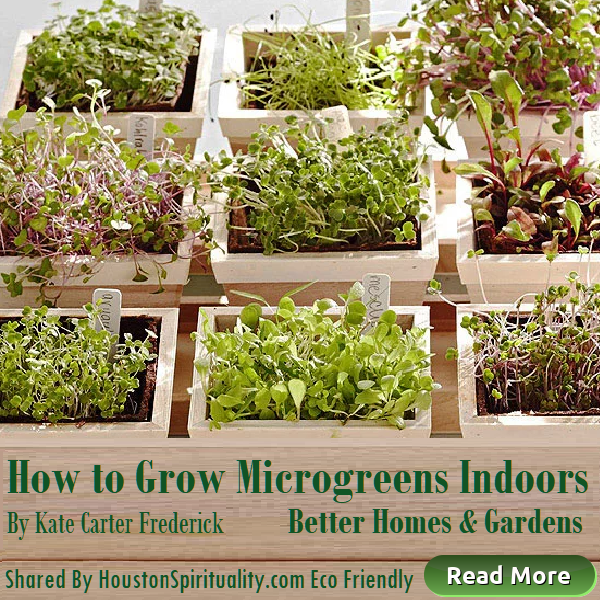 How to Grow Microgreens Indoors, Better Homes & Gardens, Eco-Friendly