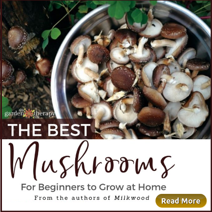 The Best Mushrooms for Beginngers to Grow at Home.