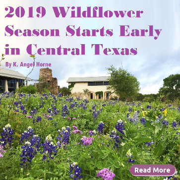 2019 Wildflower Season Starts Early in Central Texas . Eco_Friendly