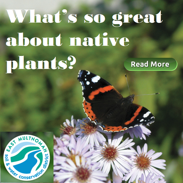 The Benefits of Native Plants for soil and water conservation