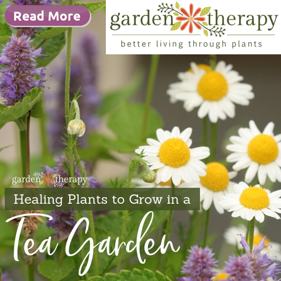 Healing Plant to Grow in a Tea Garden