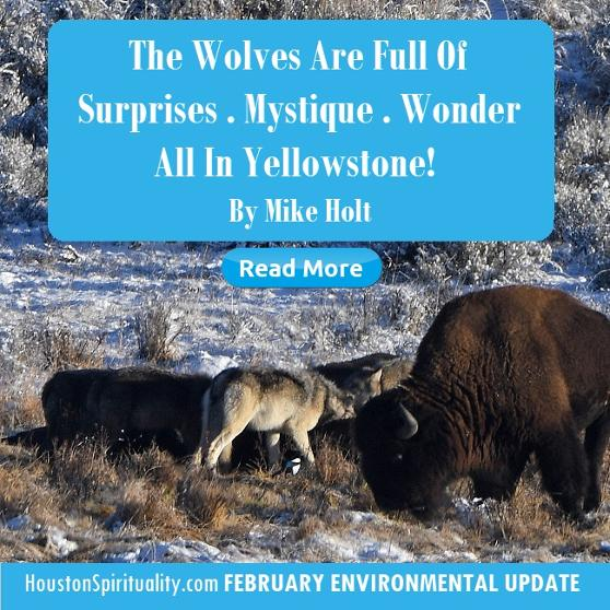 The Wolves are Full of Surprises. Mystique . Wonder by Mike Holt
