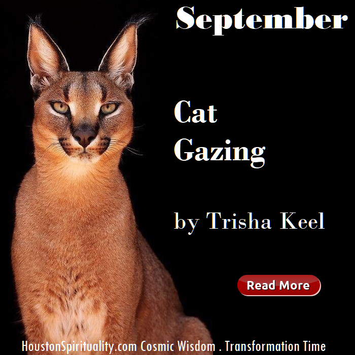 Cat Gazing - blog article by Trisha Keel