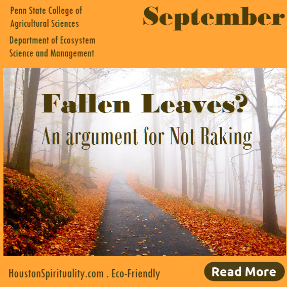 Fallen leave, an argument for not raking. Eco-friendly article
