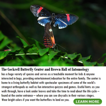 Cockrell Butterfly Center info and link