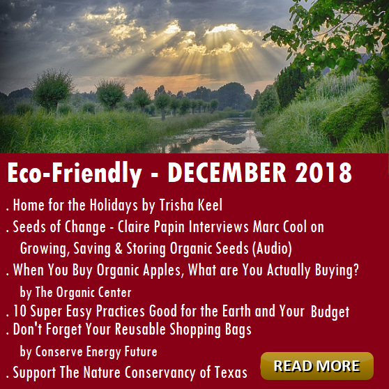 Eco-Friendly DECEMBER Articles