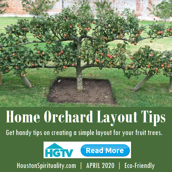 Home Orchard Layout Tips from HGTV