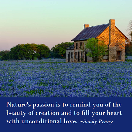 Nature's passion is to remind you of the beauty of creation and to fill your heart with unconditional love. Sandy Penny. book link
