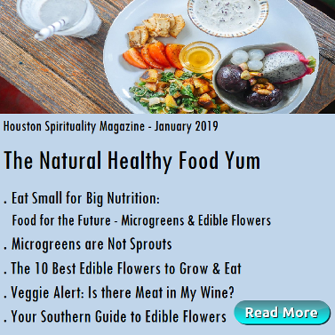 Healthy Food Yum List of articles