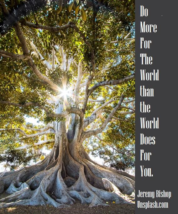 Do more for the world than the world does for you. Tree.